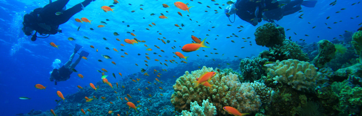 Scuba Diving on a Coral Reef with Tropical Fish
